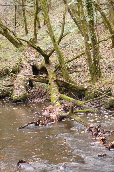 Ballade en forêt P1070915