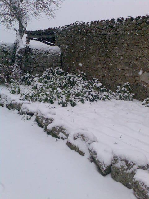 Castedo Branquinho/ Neve - Página 2 Img03510