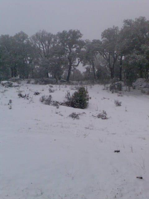 Castedo Branquinho/ Neve - Página 2 Img04310