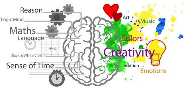 Fonctionnement de notre cerveau Cervea10