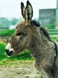 Messages du Peuple Animal : Esprit-Guide Yne10