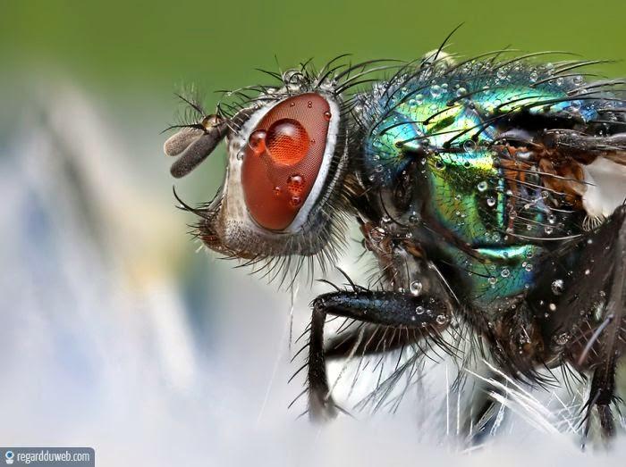 Les Buis des jardins du château de Versailles Insect11