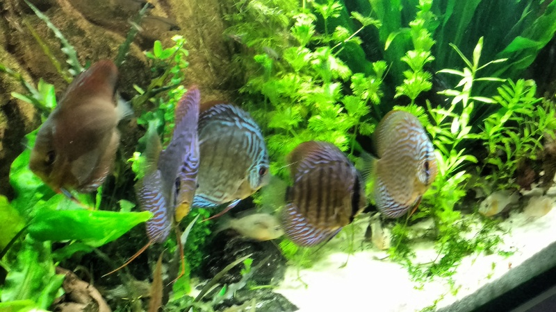[Herpo] 590L discus/altispinosa ! - Page 5 Img_2018