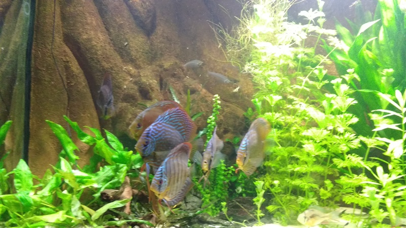 [Herpo] 590L discus/altispinosa ! - Page 5 Img_2020