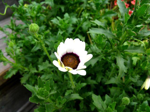 Récolte des semences, plante par plante - Page 2 Dimor_13