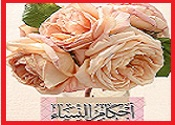 (العربي) Untitl98