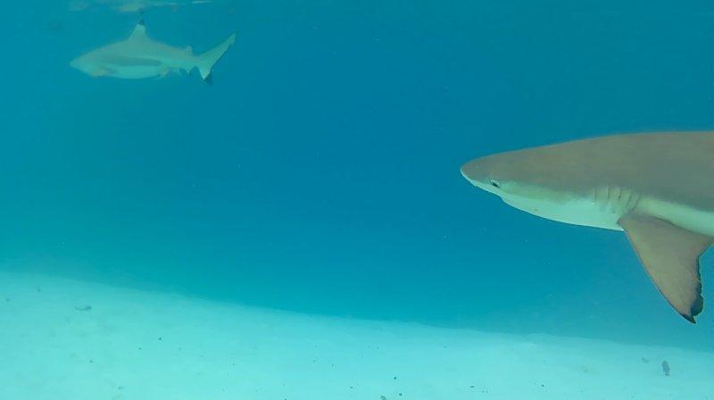 Topic voyages et des belles balades ! - Page 10 Requin10