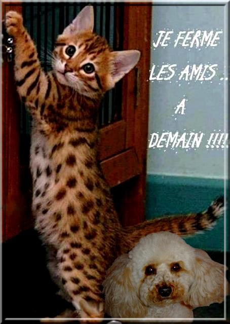 LES BONJOURS - Page 3 Bonne_45