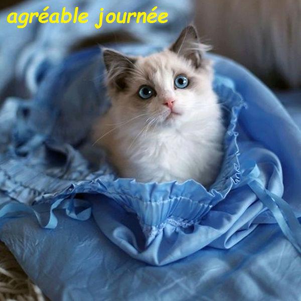 Bonjour, bonsoir..... 9493110