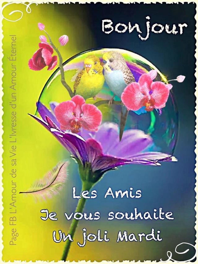 Bonjour, bonsoir..... - Page 4 9525610