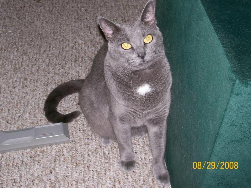 Pet Photos Lilycu11