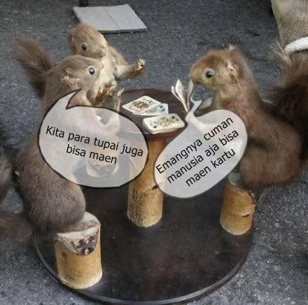 Bocah mabok dan tupai poker Tupai_11