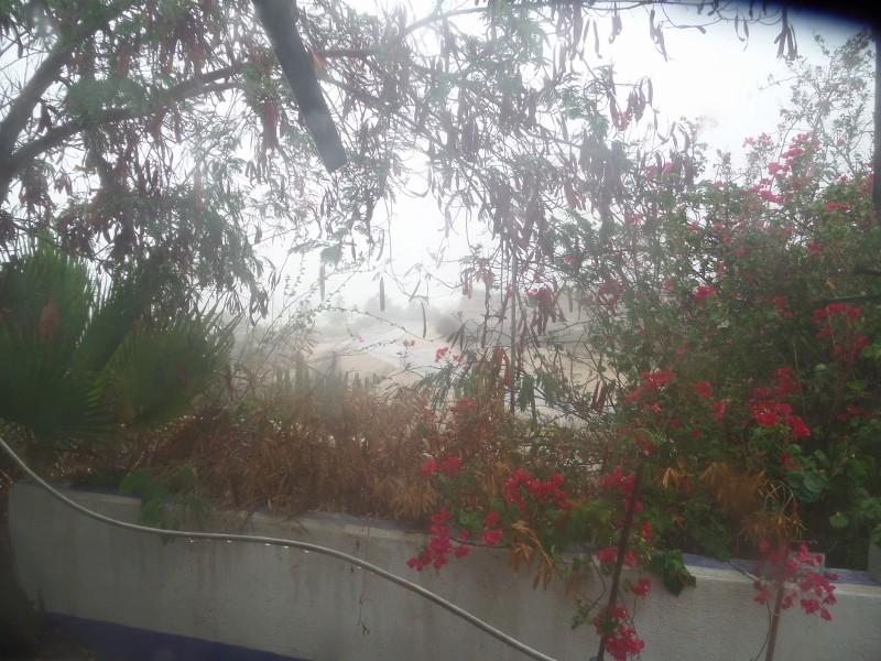 Hurricanes 2017 Sam_0532