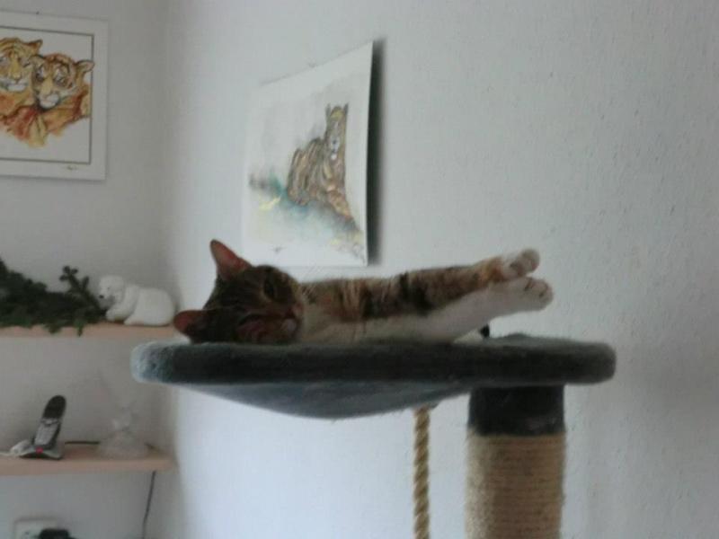 Nouvelles de nos chats partis en Allemagne le 7 décembre 2012  39927010