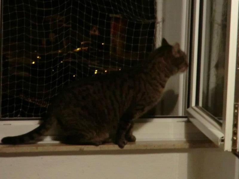 Nouvelles de nos chats partis en Allemagne le 7 décembre 2012  48147810