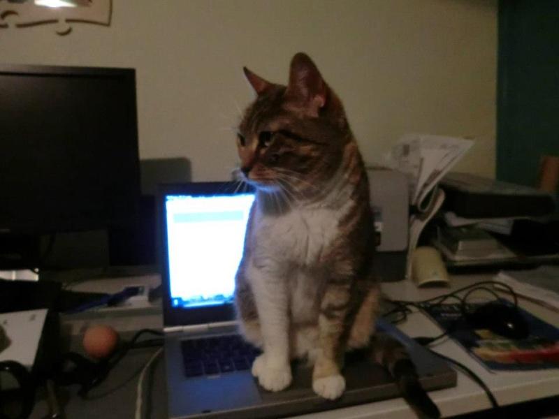 Nouvelles de nos chats partis en Allemagne le 7 décembre 2012  53030610