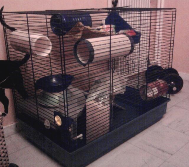 vend cage marseille furet plus  TBE  + accessoires Photo010