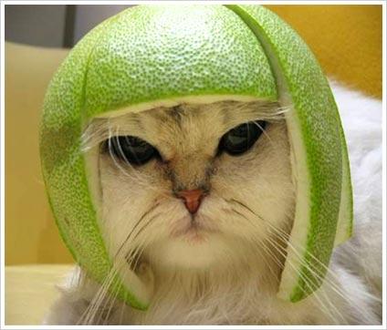 Funny Cat Funny-10