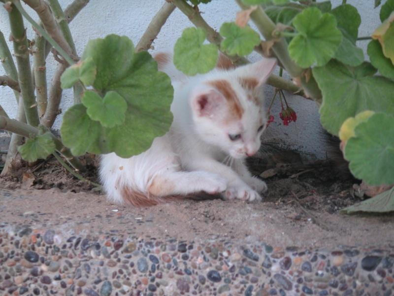 Les Chats d'Essouira Foto_m10