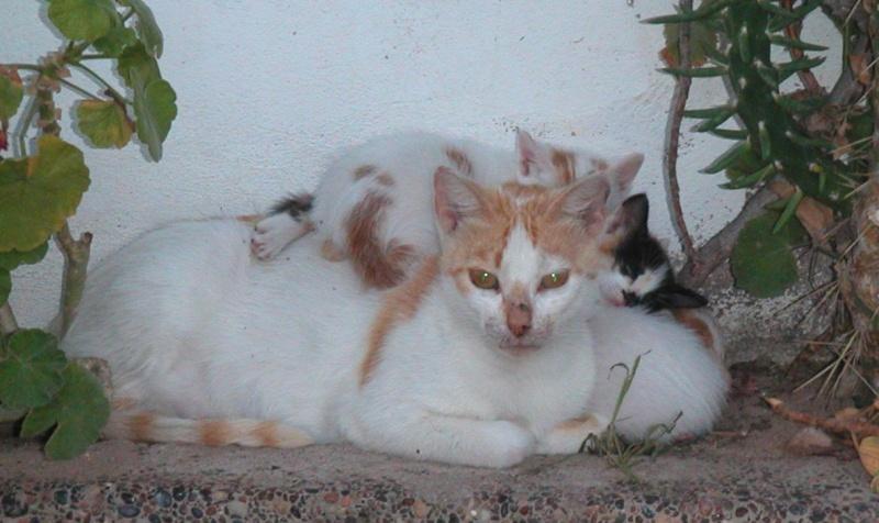 Les Chats d'Essouira Foto_m11