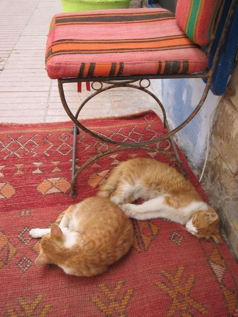 Les Chats d'Essouira Foto_m14