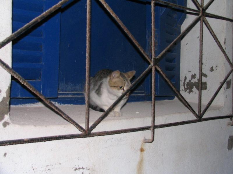 Les Chats d'Essouira Immagi18