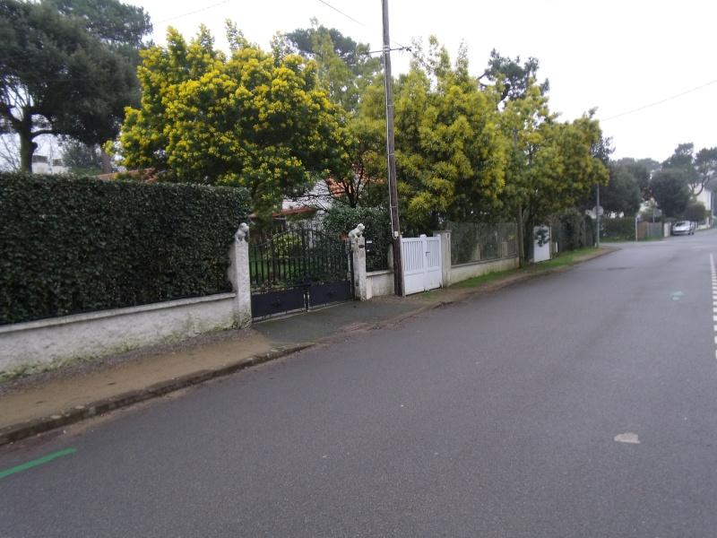 Les Mimosas Dscf1011