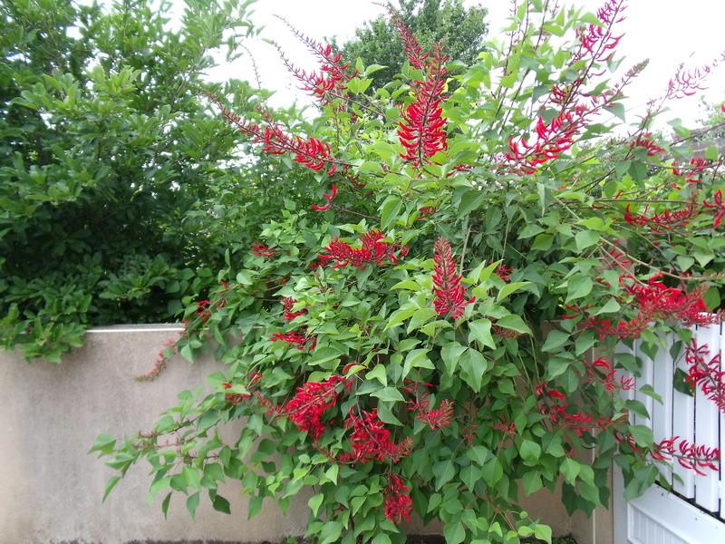 Le jardin d'Anselme (44) E_x_bi13