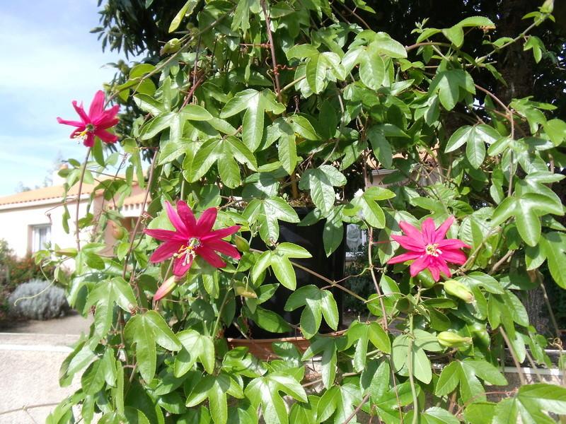 Le jardin d'Anselme (44) Passif10