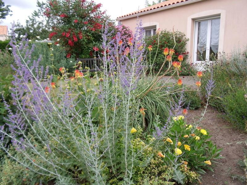ces quelques fleurs de nos jardins - Page 5 Perovs11