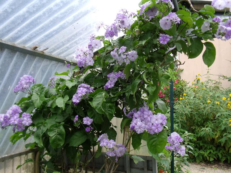 Le jardin d'Anselme (44) Solanu10