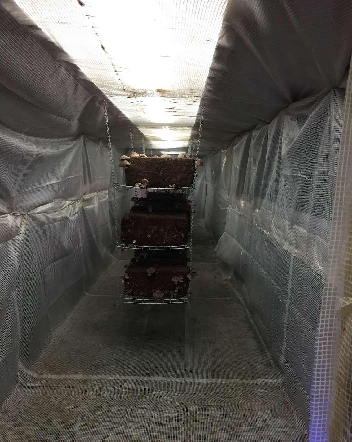 Une ferme urbaine dans un bunker ! - Page 2 5710