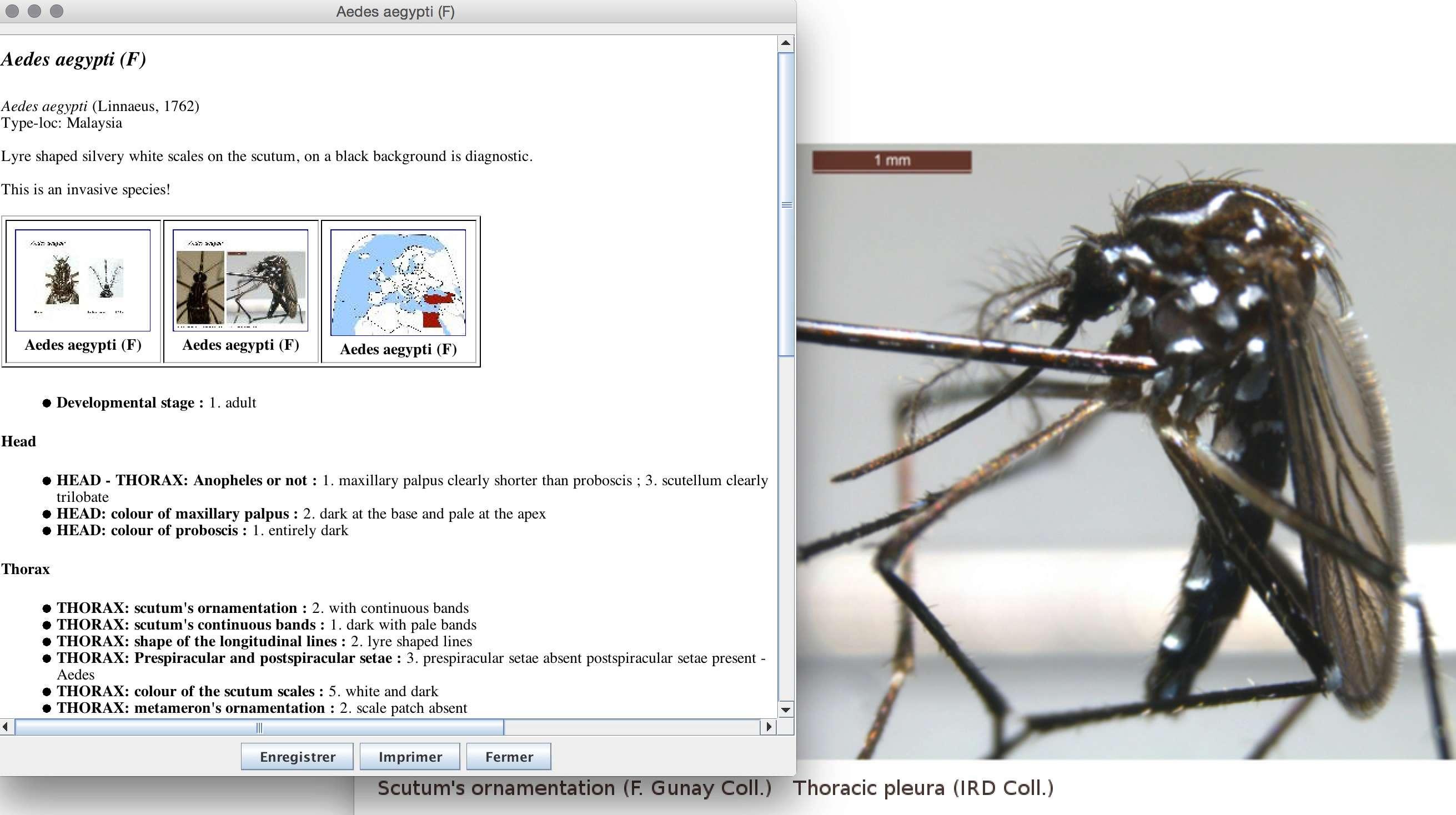 MosKeyTool : un outil interactif gratuit d'identification des moustiques en Europe Captur23