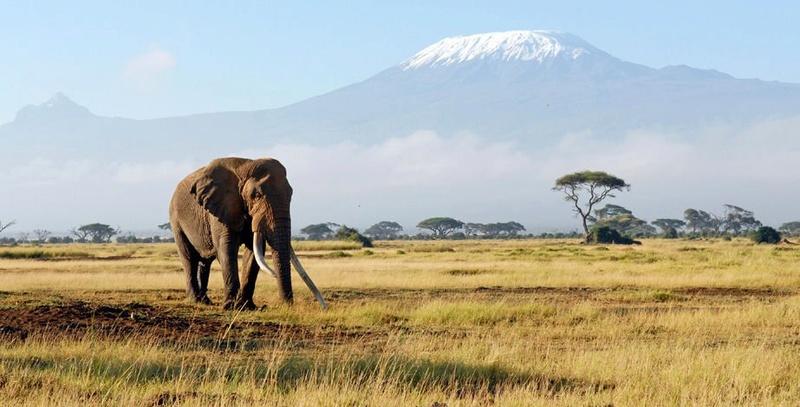 Il grimpe le Kilimandjaro et gagne deux triathlons alors qu'il touche une pension d'invalidité Kilima10