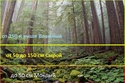 Разведение костра в мокром лесу. 13300810