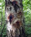 Разведение костра в мокром лесу. Bakt10