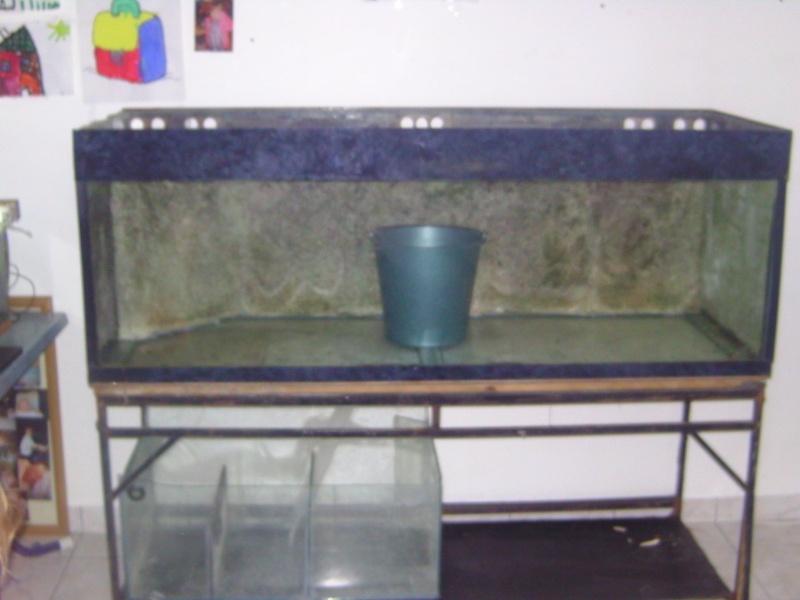 aquariums draco53 Bild1611