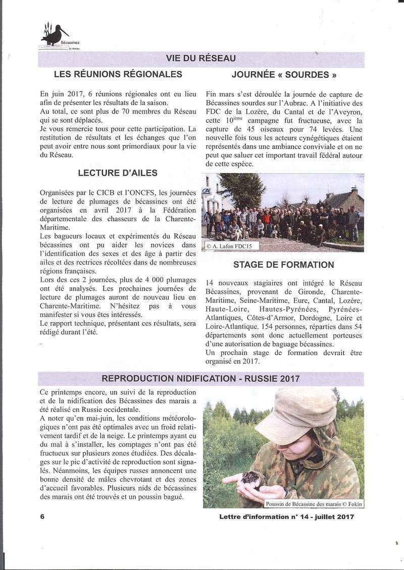 Réseau bécassines lettre Juillet 2017 Bec610