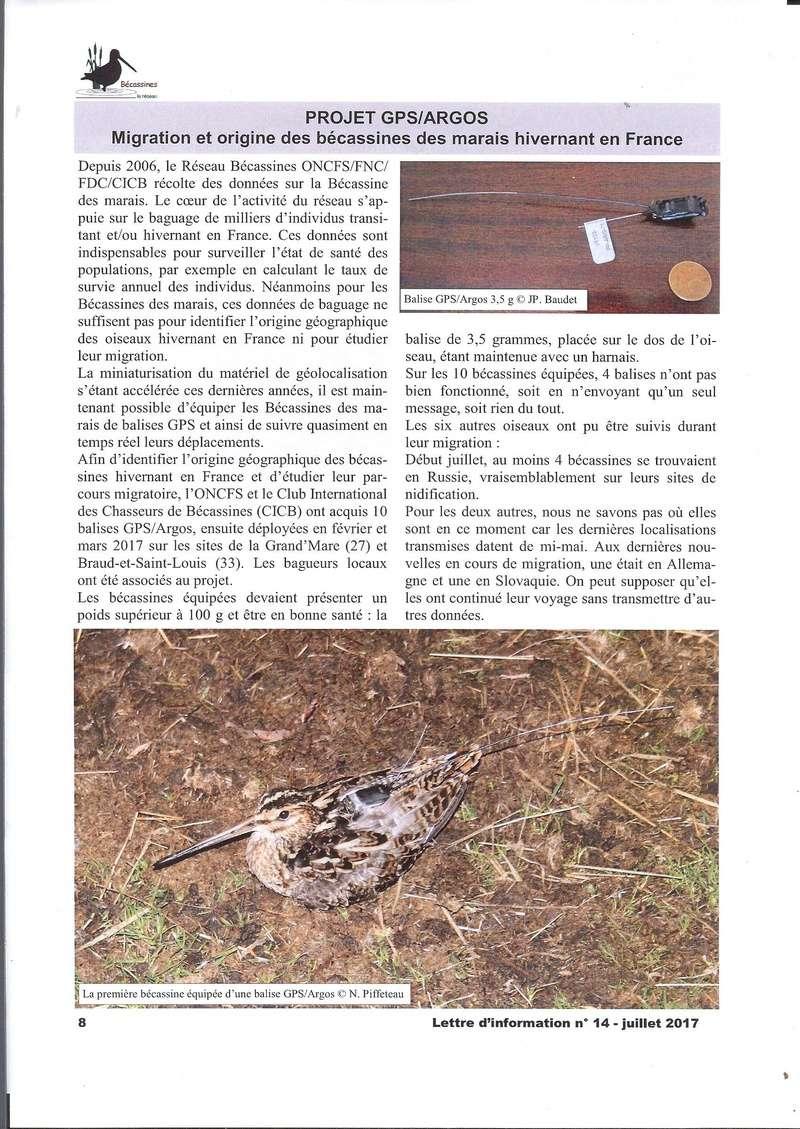Réseau bécassines lettre Juillet 2017 Bec811