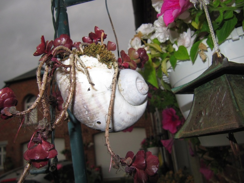 Des... escargots... géants... et leur terrarium tropical 01511