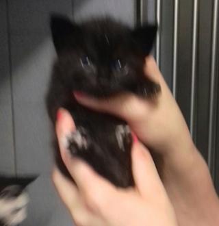 1 maman et ses 5 chatons de 15 jours Chaton10