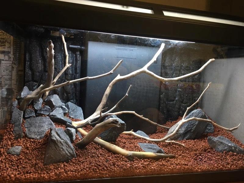 Décor Aquarium 60L 20479411