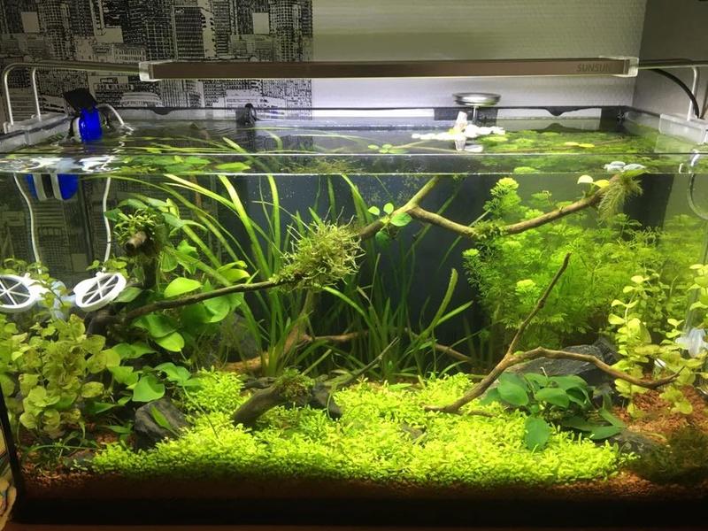 Décor Aquarium 60L 21270810