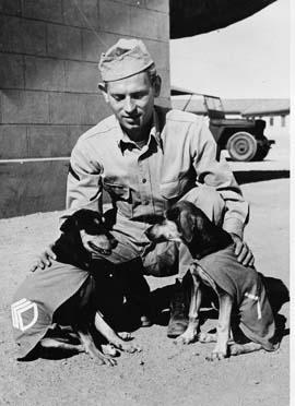 LES CHIENS SOUS L'UNIFORME DANS L'US ARMY Dogs_m10