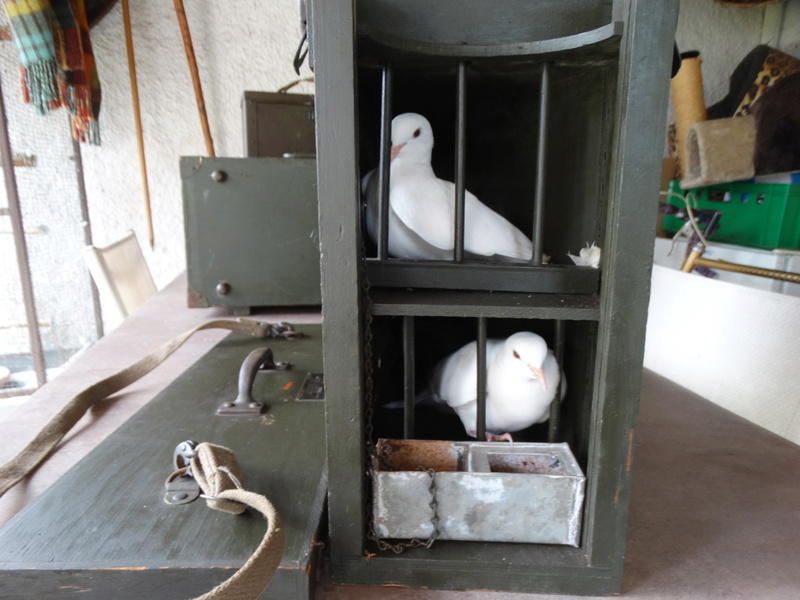 salle des ventes du 1er juillet caisse à pigeons Dsc08313