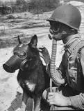 LES CHIENS SOUS L'UNIFORME DANS L'US ARMY Images10