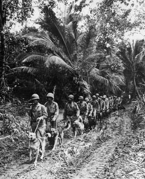 LES CHIENS SOUS L'UNIFORME DANS L'US ARMY Wardog17