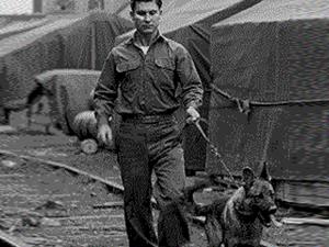 LES CHIENS SOUS L'UNIFORME DANS L'US ARMY Worls-10