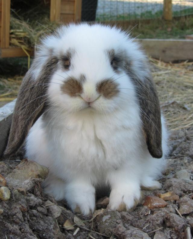 Ma future boule de poil : Lola Bunny Lola10