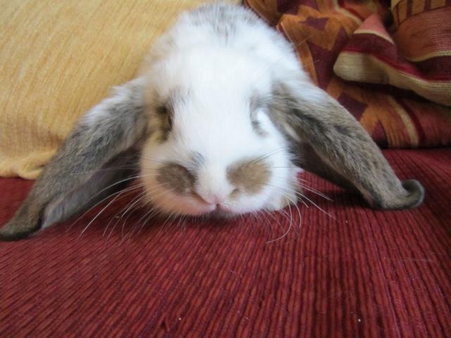 Ma future boule de poil : Lola Bunny Minigr10